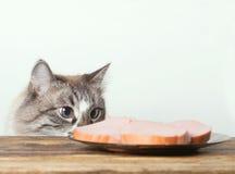 Νέα γάτα κοντά σε ένα πιάτο στοκ φωτογραφίες