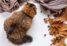Νέα γάτα μετά από να φάει τα τρόφιμα από ένα πιάτο Στοκ φωτογραφίες με δικαίωμα ελεύθερης χρήσης