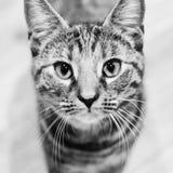 Νέα γάτα ομορφιάς Στοκ φωτογραφία με δικαίωμα ελεύθερης χρήσης