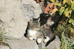 Νέα γάτα που βρίσκεται στον ήλιο Στοκ Εικόνα