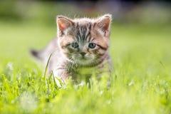 Νέα γάτα στην πράσινη χλόη στοκ φωτογραφία
