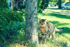 Νέα γάτα Στοκ φωτογραφία με δικαίωμα ελεύθερης χρήσης