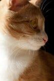 Νέα γάτα Στοκ Φωτογραφία
