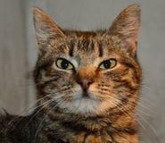 Νέα γάτα Στοκ εικόνα με δικαίωμα ελεύθερης χρήσης