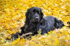 Νέα γη στα κίτρινα φύλλα φθινοπώρου Στοκ φωτογραφία με δικαίωμα ελεύθερης χρήσης