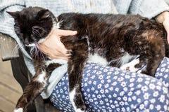νέα γυναίκα και η χαλάρωση γατών της στοκ φωτογραφίες