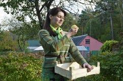 Νέα γυναίκα και μήλα Στοκ Φωτογραφία