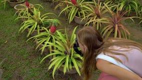 Νέα γυναίκα και ο γιος της που επισκέπτονται έναν τροπικό κήπο με τα εξωτικές οπωρωφόρα δέντρα και τις εγκαταστάσεις Steadicam πο απόθεμα βίντεο