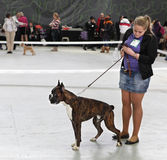 Νέα γυναίκα και το σκυλί της Στοκ Εικόνα