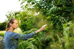 Νέα γυναίκα που επιλέγει elderflower Στοκ φωτογραφία με δικαίωμα ελεύθερης χρήσης