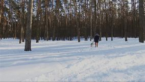 Νέα γυναίκα που περπατά με το σκυλί του Λαμπραντόρ στο χειμερινό δάσος, έννοια χειμερινών διακοπών απόθεμα βίντεο