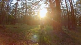 Νέα γυναίκα που περπατά στο δάσος στο ηλιοβασίλεμα απόθεμα βίντεο
