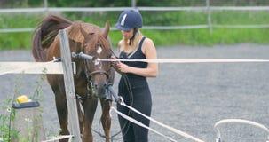 Νέα γυναίκα που προετοιμάζει το αραβικό άλογό της για την οδήγηση στο αγρόκτημα απόθεμα βίντεο