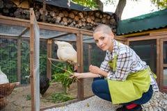 Νέα γυναίκα που ταΐζει τα ελεύθερα κοτόπουλα σειράς της Ωοτόκες όρνιθες αυγών και νέος θηλυκός αγρότης κατανάλωση υγιούς οργα&n στοκ φωτογραφία