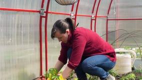 Νέα γυναίκα που φυτεύει τις ντομάτες στο έδαφος φιλμ μικρού μήκους