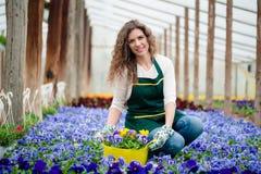 Νέα γυναίκα σε έναν ζωηρόχρωμο κήπο λουλουδιών σε ένα θερμοκήπιο που επιλέγει ένα δοχείο λουλουδιών Στοκ εικόνες με δικαίωμα ελεύθερης χρήσης