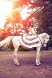 Νέα γυναίκα σε ένα άλογο Αναβάτης πλατών αλόγου, άλογο οδήγησης γυναικών Στοκ Εικόνες