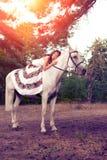Νέα γυναίκα σε ένα άλογο Αναβάτης πλατών αλόγου, άλογο οδήγησης γυναικών Στοκ φωτογραφία με δικαίωμα ελεύθερης χρήσης