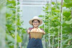 Νέα γυναίκα σε ένα θερμοκήπιο με το καλάθι κολοκύνθης butternut στοκ εικόνες