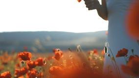 Νέα γυναίκα brunette στα άσπρα sundress που περπατά μέσω του τομέα παπαρουνών στο ηλιοβασίλεμα απόθεμα βίντεο