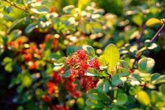 Νέα δέντρα της Apple λουλουδιών την άνοιξη Στοκ Εικόνα