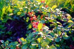 Νέα δέντρα της Apple λουλουδιών την άνοιξη Στοκ φωτογραφία με δικαίωμα ελεύθερης χρήσης