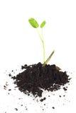 Νέα δέντρο και χώμα που απομονώνονται Στοκ φωτογραφία με δικαίωμα ελεύθερης χρήσης