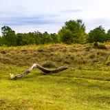 Νέα δασική δασώδης περιοχή, με ένα ενιαίο κούτσουρο και τα δέντρα στο υπόβαθρο Στοκ φωτογραφία με δικαίωμα ελεύθερης χρήσης