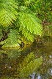 Νέα Ζηλανδία Μπους και φτέρες στοκ φωτογραφία με δικαίωμα ελεύθερης χρήσης