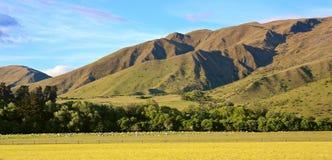 Νέα Ζηλανδία και τα βουνά Στοκ Εικόνα