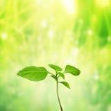 Νέα ζωή, πράσινο υπόβαθρο φω'των Στοκ Εικόνες