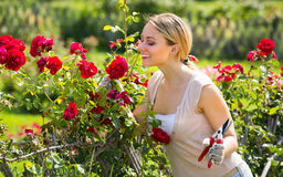 Νέα θηλυκά τριαντάφυλλα φροντίδας κηπουρών Στοκ φωτογραφίες με δικαίωμα ελεύθερης χρήσης