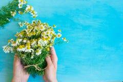 Νέα καυκάσια ανθοδέσμη λαβής γυναικών των πρόσφατα επιλεγμένων Camomile λουλουδιών που δένονται με το σπάγγο στον ανοικτό μπλε ξύ Στοκ εικόνες με δικαίωμα ελεύθερης χρήσης