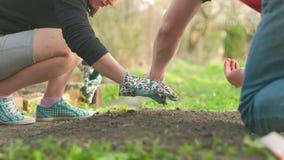 Νέα κηπουρική ενηλίκων απόθεμα βίντεο
