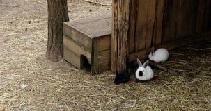 Νέα κουνέλια που κάθονται σε ένα hutch απόθεμα βίντεο