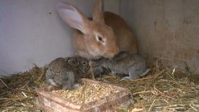 Νέα κουνέλια σε ένα hutch απόθεμα βίντεο