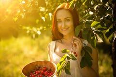 Νέα κυρία στα κεράσια επιλογής κήπων σε ένα κύπελλο Στοκ Εικόνες