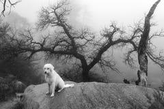 Νέα μεξικάνικη ομίχλη βουνών Στοκ φωτογραφία με δικαίωμα ελεύθερης χρήσης