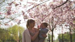 Νέα μητέρα mom που κρατά την λίγο παιδί αγοριών γιων μωρών κάτω από τα ανθίζοντας δέντρα κερασιών Sakura με τα μειωμένα ρόδινα πέ απόθεμα βίντεο