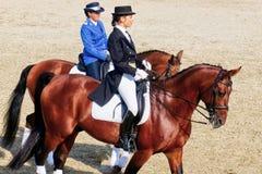 Νέα πλάτη αλόγου jockeys που οδηγά στα καθαρής φυλής άλογα στοκ φωτογραφία με δικαίωμα ελεύθερης χρήσης