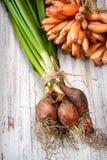 Νέα πράσινα κρεμμύδια με τους σπόρους Στοκ Εικόνες