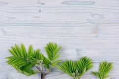 Νέα πράσινα φύλλα στον ανοικτό μπλε ξύλινο πίνακα Στοκ φωτογραφία με δικαίωμα ελεύθερης χρήσης
