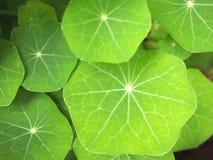 Νέα πράσινα φύλλα στοκ εικόνες