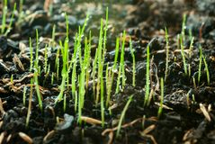 Νέα πράσινη χλόη με τις πτώσεις δροσιάς στη γεωργική γη Στοκ Φωτογραφίες
