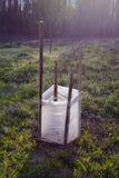 Νέα προστασία δέντρων μηλιάς με το πολυαιθυλένιο Στοκ Εικόνα