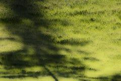 Νέα σκιά δέντρων Dreamlike σε μια πράσινη χλόη στη δροσιά πρωινού Στοκ εικόνα με δικαίωμα ελεύθερης χρήσης
