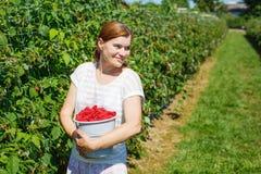 Νέα σμέουρα επιλογής γυναικών στην επιλογή ένα αγρόκτημα μούρων στη Γερμανία Στοκ Φωτογραφίες