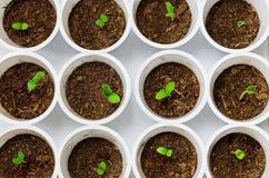 Νέα σπορόφυτα πράσινων εγκαταστάσεων στοκ φωτογραφία