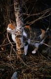 Νέα συνεδρίαση γατών Tigered κοντά σε έναν κορμό στοκ εικόνες με δικαίωμα ελεύθερης χρήσης