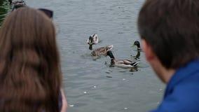 Νέα συνεδρίαση ζευγών από τον ποταμό και τις ταΐζοντας πάπιες, πέρα από την άποψη ώμων απόθεμα βίντεο